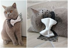 Cat Bow Tie Collar Velvet and Tulle Dog Bow tie Pet Bow by PinkBau