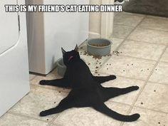 「猫の行動ってやっぱり変だ!」ゆかいな写真20枚
