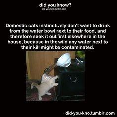 || smart kitty