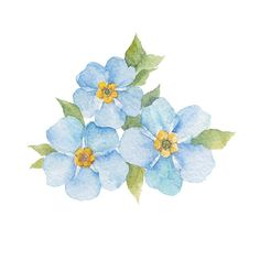 Flower Painting Discover Watercolor illustration of forget-me-not flowers design element. Forget-me-not flowers isolated on white background. Illustration Blume, Watercolor Illustration, Free Vector Graphics, Free Vector Art, Watercolor Cards, Watercolor Paintings, Watercolour, Forget Me Not Tattoo, Watercolor Flowers Tutorial