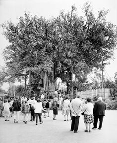 The Swiss Family Tree house in Disneyland Park at the Disneyland Resort