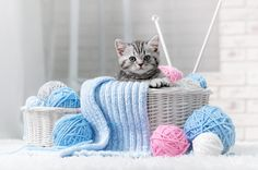 Gray Striped Kitten jigsaw puzzle in Animals puzzles on TheJigsawPuzzles.com