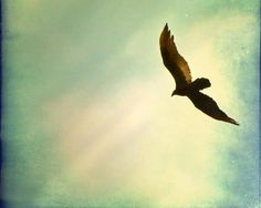 "Bird Photography, ""Soaring"" 8x10 Metallic Signed Photo, red tailed hawk, azure sky, aqua, blue green, birds, bird in flight. $30.00, via Etsy."