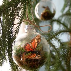 Create your own little nature scene in a terrarium that never requires watering. Dried sheet moss is placed inside a clear glass ornament globe along with any little decorations you like including feathers and paper butterflies. Get the tutorial at Design Sponge.