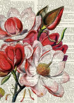 magnolia print, vintage flower artwork on vintage dictionary page, vintage dictionary art print, wall art prints, upcycled book page