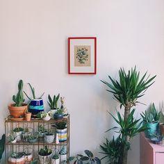 indoor jungle // @jojotastic on instagram
