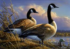 canadian geese habitat | South Dakota Artist Wins 2008 Federal Duck Stamp Contest | Outdoor ...