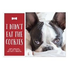"""This funny pet holiday photo card is perfect for dog lovers. The red and white dog Christmas card includes the phrase """"I didn't eat the cookies"""" written in hand lettering. Personalize with your names, favorite dog photo, and custom holiday greeting. Christmas Photo Cards, Christmas Photos, Holiday Cards, Christmas Holiday, Xmas, Holiday Gifts, Christmas Ornaments, Birthday Verses, Holiday Invitations"""