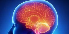 ¿Cómo funciona el cerebro de un corrupto? - http://aquiactualidad.com/funciona-cerebro-corrupto/