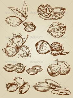 Realistic Graphic DOWNLOAD (.ai, .psd) :: http://sourcecodes.pro/pinterest-itmid-1002598985i.html ... Set of Various Vintage Nuts ...  almond, chestnut, decorative, food, groundnut, hazelnut, nut, old, peanut, pecan, pistachio, plant, retro, shell, tasty, vector, vintage, walnut  ... Realistic Photo Graphic Print Obejct Business Web Elements Illustration Design Templates ... DOWNLOAD :: http://sourcecodes.pro/pinterest-itmid-1002598985i.html