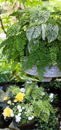 How to create beautiful shade garden pots using easy to grow plants with showy foliage and flowers. And plant lists for all 16 container planting designs! - A Piece Of Rainbow planting 16 Colorful Shade Garden Pots and Plant Lists Diy Garden, Garden Design, Plants, Container Plants, Growing Plants, Plant Design, Shade Plants, Garden Plant Pots, Shade Garden Design