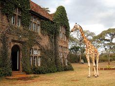 giraffe manor - really!