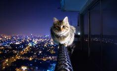 ¿Qué haces ahí, gatito?