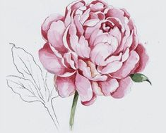 This #peony sketch is one of the official design motifs for the soon-to-be-revealed @Miranda Kerr for #RoyalAlbert collection. #MirandaKerr #MirandaKerrforRoyalAlbert