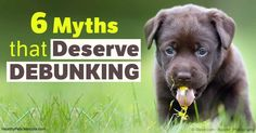 """Myths about dogs persist; one myth that definitely deserves discrediting is the old saying """"you can't teach an old dog new tricks."""" http://healthypets.mercola.com/sites/healthypets/archive/2017/05/10/dog-myths-deserve-debunking.aspx?utm_source=petsnl&utm_medium=email&utm_content=art1&utm_campaign=20170510Z1&et_cid=DM142817&et_rid=1999896047"""