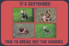 Dog Meme, September,  https://www.facebook.com/FenwayFamily