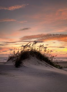 Dune Sunrise - Living - Beach and Sand I Love The Beach, Beach Scenes, Beach Photos, Pictures Of The Beach, Belle Photo, Beautiful Beaches, Land Scape, Beautiful World, Nature Photography