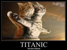 funniest animal pictures | Funny-animal-titanic by XXspiritwolf2000XX lol