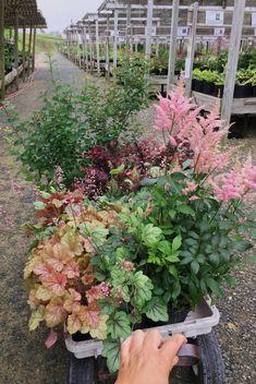 Shade Flowers, Shade Plants, Cut Flowers, Fresh Flowers, Small City Garden, Small Gardens, Outdoor Gardens, Dream Garden, Backyard Shade