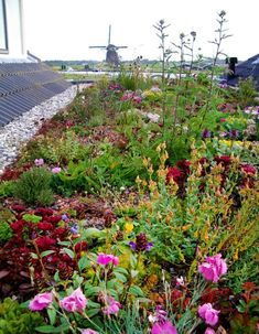 An eco-friendly rooftop has many rewards at economic, natural and public level, a roofing creates a rainwater shield, clears the air flow, lessens the pollution Rooftop Garden, Balcony Garden, Garden Ideas Uk, Home And Garden, Green Facade, Green Roofs, Rose Cottage, Green Building, Garden Styles
