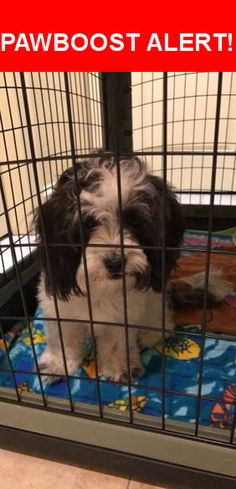 Is this your lost pet? Found in Magnolia, TX 77354. Please spread the word so we can find the owner!  Black and white, black around the face with a white spot on the top of her head.   Near Allyson Rd & Magnolia Hills Dr