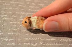 Fluffy Guinea Pig by insanable.deviantart.com on @deviantART
