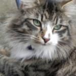 7 Tips to Keep Your Cat's Litter Box Smelling Fresh! - PetLvr Community Blog for Pet Lovers
