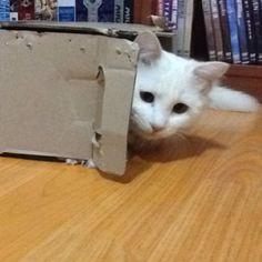 BOX Holic