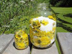 Рецепты лечения одуванчиком В народной медицине одуванчик используется очень широко.Травники рекомендуют его...
