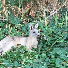 This cutie was injured and hopped off into the bush when we walked past on our hike