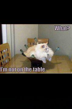 Hahaha lol lol lazy cat