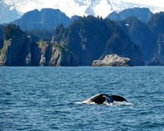 Humpback Whale Diving - Kenai Peninsula, Alaska - see our travel blog: www.UnhookNow.com