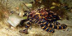 Résultats de recherche d'images pour «pieuvre et poulpe»