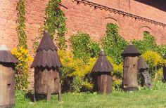 .bee hives Poland