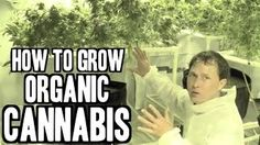 grow your own medical weed - YouTube