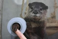 33 Incredibly Fascinating Photos~~An aquarium the lets you hold an otters hand...adorable!