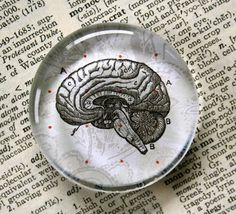 Who couldnt use more brains? Brain jumbo glass magnet, by CrowBiz Zombie Gifts or Zombie presents for that hard to shop for Undead in your life