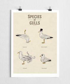 Species of Gulls vol. 1 - Art print - TAULUT JA JULISTEET