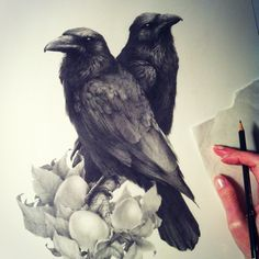 This raven commission is based on the two very friendly birds that visit my clients ranch in Northern California, they love to be fed eggs and it was so enjoyable working that element into the composition!