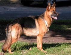 Los perros mas lindos del mundo - Taringa!