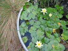 teich im eimer wasserlilien wassergarten selbermachen