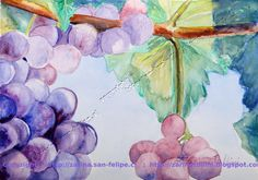 Titulo: Mis uvas  Tamaño: 25,5 x 35,5 cm Técnica: Acuarela por Zarina Tollini  Puedes ver más  zarinatollini.blo...  www.facebook.com/...