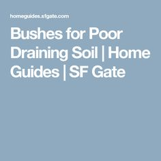 Bushes for Poor Draining Soil | Home Guides | SF Gate