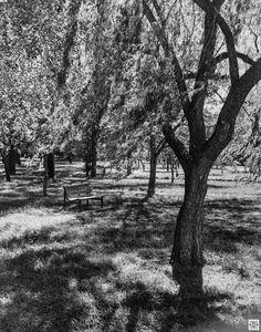 T Max, Urban Landscape, Olympus, Benches, Still Life, Landscape Photography, Parks, Centre, Australia