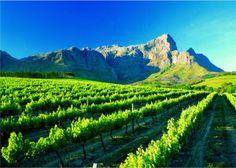 A vineyard near Franschhoek - Western Cape Province home of La Clé des Montagnes