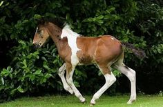 Ce cheval est nee avec un dessin de cheval