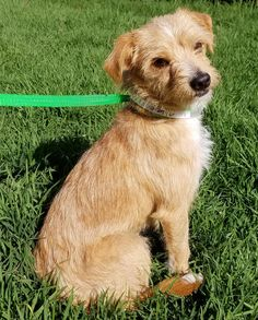 #nkla #dog #adopt #dogs #rescue #losangeles Los Angeles Area, West Hollywood, Small Dogs, Chihuahua, Adoption, Animals, Foster Care Adoption, Little Dogs, Animales