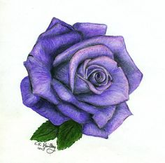 Purple Rose Drawing Images & Pictures - Becuo