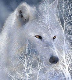 the wolf native wisdom | Photo: ~I believe much trouble would be saved if we opened our hearts ...