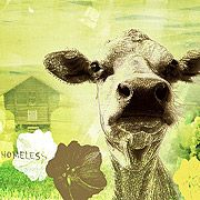 Homeless cow returns! Cow, Moose Art, Painting, Animals, Happy, Wall, Animales, Animaux, Painting Art